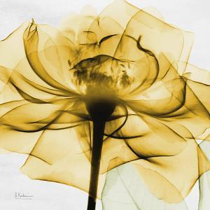 Golden Rose Close-Up by Albert Koetsier