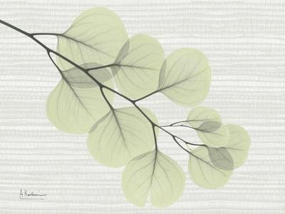 Grasscloth Eucalyptus