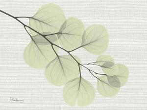 Grasscloth Eucalyptus by Albert Koetsier