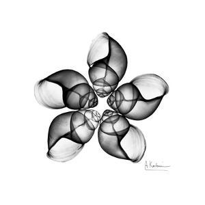 Gray Snail Shells 1 by Albert Koetsier