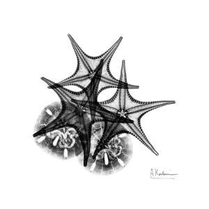 Gray Starfish 2 by Albert Koetsier