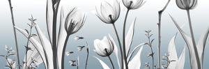 Heavenly Botanicals by Albert Koetsier
