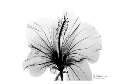 Hibiscus in Black and White by Albert Koetsier