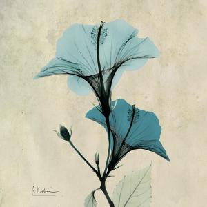 Hibiscus Moment by Albert Koetsier