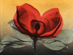 Hot Magnolia 1 by Albert Koetsier