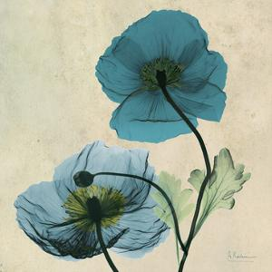 Iceland Poppy Duo 2 by Albert Koetsier