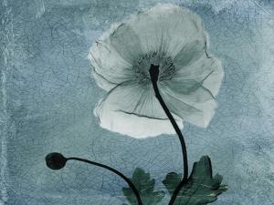 Iceland Poppy by Albert Koetsier