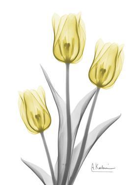 Illuminating Tulip Trio 2 by Albert Koetsier