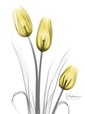 Illuminating Tulip Trio by Albert Koetsier