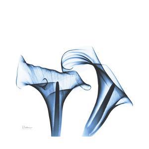 Indigo Calla Lilies D by Albert Koetsier