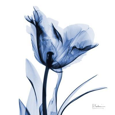 Indigo Softened Tulip