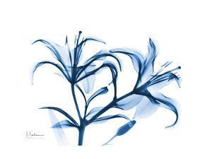 Indigo Starfire Lily by Albert Koetsier