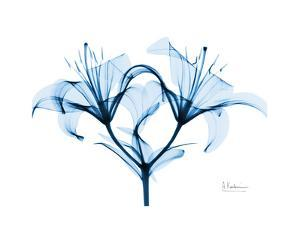 Indigo Starflame Lily by Albert Koetsier