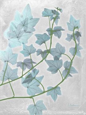 Ivy Blues by Albert Koetsier