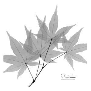 Japanese Maple in Black and White by Albert Koetsier