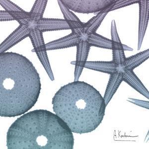 Lavender Dipped Starfish 2 by Albert Koetsier