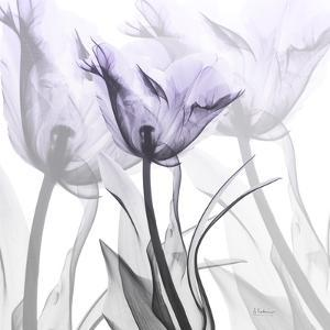 Lilac Luster Tulip 2 by Albert Koetsier