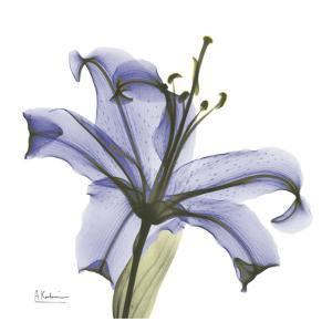 Lily in Purple by Albert Koetsier