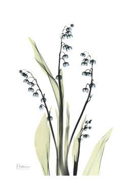 Lily of The Valley in Bloom by Albert Koetsier