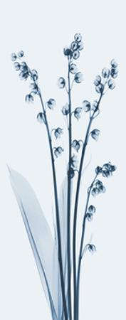 Lily of The Valley in Blue II by Albert Koetsier