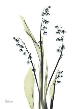 Lily of the Valley by Albert Koetsier