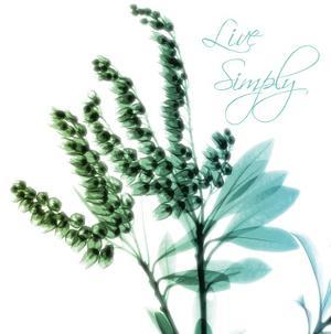 Live Simplyt by Albert Koetsier