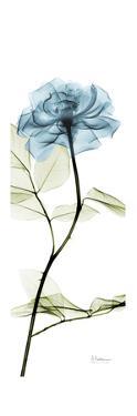 Long Blue Rose by Albert Koetsier