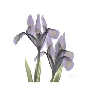 Lounging Lavender 1 by Albert Koetsier