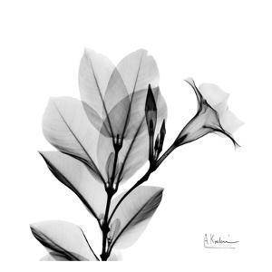 Madelia in Black and White by Albert Koetsier