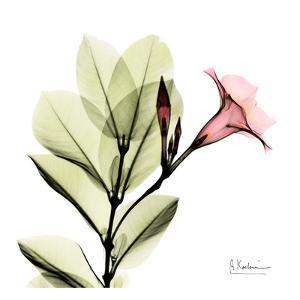 Madelia in Pink by Albert Koetsier