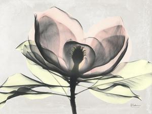 Magnolia I Gray by Albert Koetsier