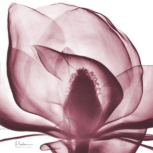 Magnolia Marcela by Albert Koetsier