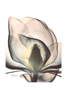 Magnolia Portrait by Albert Koetsier