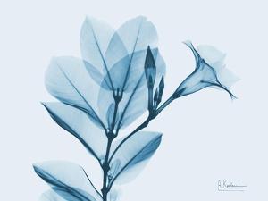 Mandelilla in Blue by Albert Koetsier