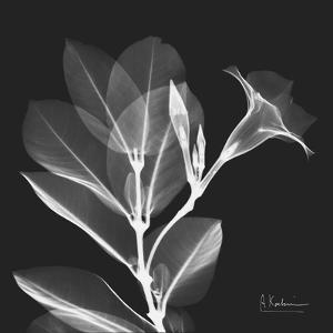 Mandelilla Shadow 1 by Albert Koetsier