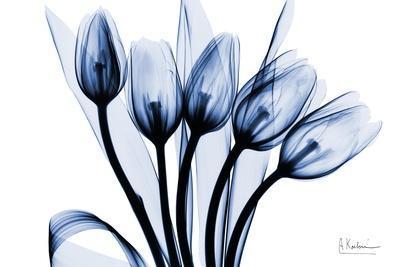 Marvelous Indigo Tulips 2