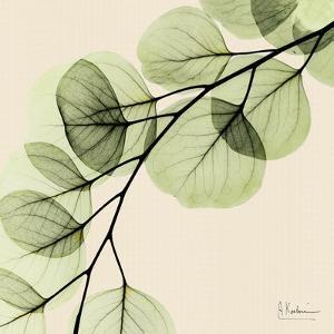 Mint Eucalyptus 1 by Albert Koetsier