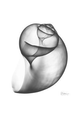 Moon Snail Twist Up by Albert Koetsier