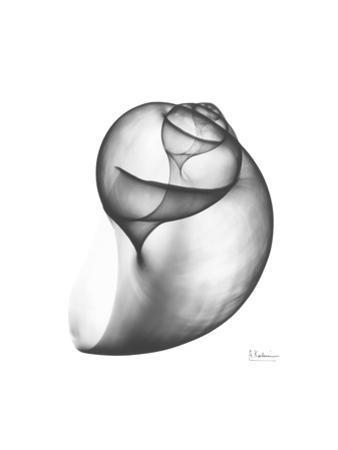 Moon Snail Twist Up