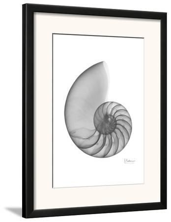 Nautilus Single