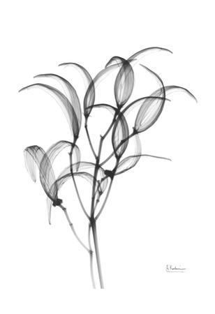 Nightly Oleander Bush by Albert Koetsier