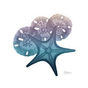 Ocean Hues Starfish and Sand Dollar by Albert Koetsier