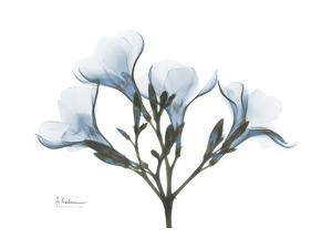 Oleander Portrait by Albert Koetsier