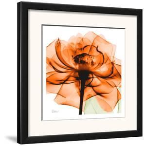 Orange Rose by Albert Koetsier