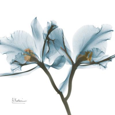 Orchid Blue by Albert Koetsier