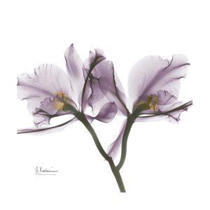 Orchid Lavender by Albert Koetsier