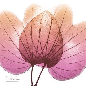 Orchid tree Pink by Albert Koetsier