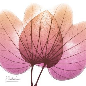 Orchid tree Pink by Albert Koetsier