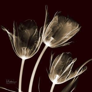 Parrot Tulips 1 by Albert Koetsier