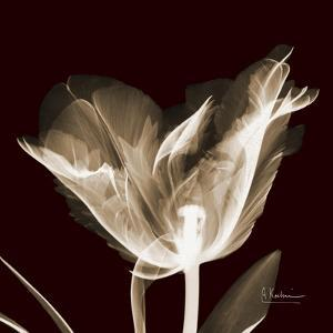 Parrot Tulips 2 by Albert Koetsier